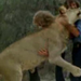Two men rescued a lonely lion cub at an English department store and raised the cub until he became too big for their home.  Then the men helped the lion get reintroduced to the wild in Africa.  They went to visit the animal a year later — and were warned the wild lion would not remember them. Check out the YouTube video of their surprising and touching reunion.
