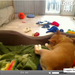 This video of six Shiba Inu puppies sleeping and playing captured the attention of millions of animal lovers nationwide.