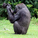 An 11-year-old gorilla named Gana was devastated when her 3-month-old son, Claudio, suddenly died in her arms from unknown causes. She continued to carry Claudio's lifeless body around and would not release it to anyone at the zoo. Our hearts ached for this grieving mom, and she reminds us that all the feelings, worries and emotions associated with motherhood are universal.