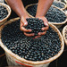 "The powerhouse berry from the Amazon protects against cardiovascular disease and lower cholesterol.. It's also the ""it"" ingredient in anti-aging beauty products."